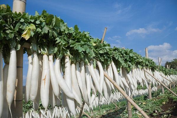 Thông báo đơn hàng nông nghiệp nữ trồng củ cải