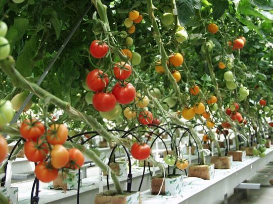 Thông báo đơn hàng Nông Nghiệp trồng rau củ quả