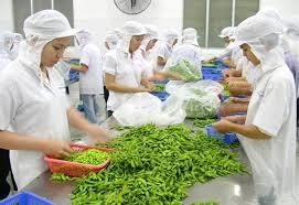 Tuyển 6 nam 6 nữ tham gia thi tuyển đơn hàng chế biến thực phẩm